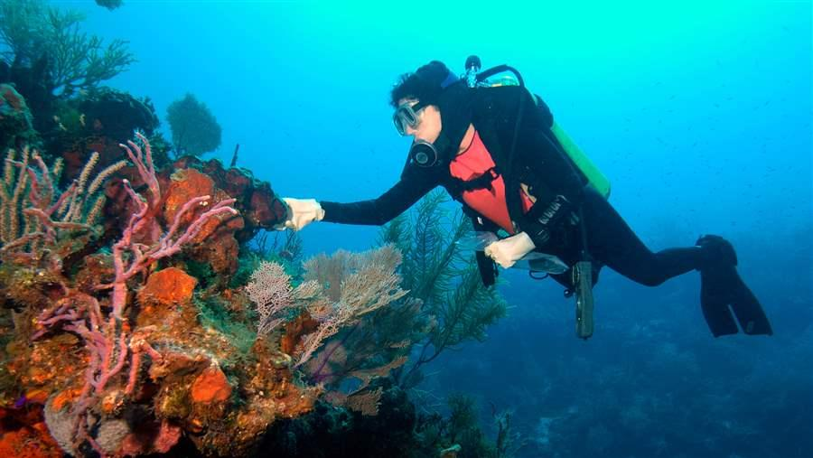 Deep-Sea Coral Ecosystems May Hold Cancer Cures, but Face ...