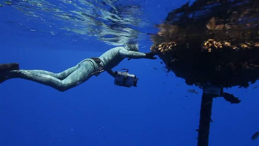 Diver approaches floating sea plants.