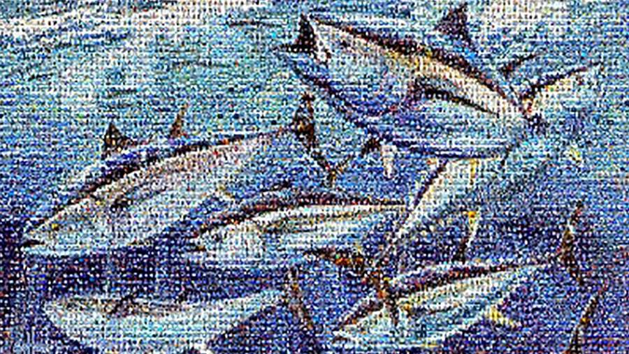 Bluefin Tuna Mosaic