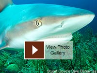 Shark Conservation Photo Gallery