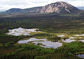 Boreal Forest peatlands, credit: Chad Delany