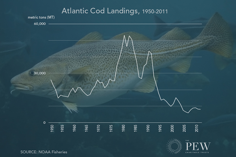Atlantic cod landings