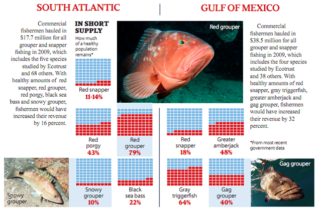 eosa-overfishing-red-grouper-633