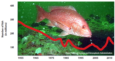 eosa-red-snapper-decline