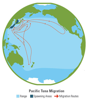 Pacific Tuna Migration