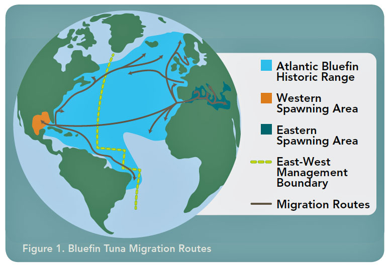 tuna-migration-776-RC.jpg