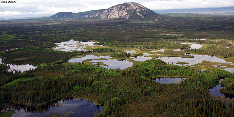 Boreal wetlands in the Northwest Territories  Credit: Chad Delany