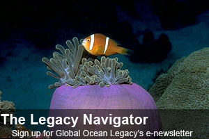 Sign up for Global Ocean Legacy's Newsletter