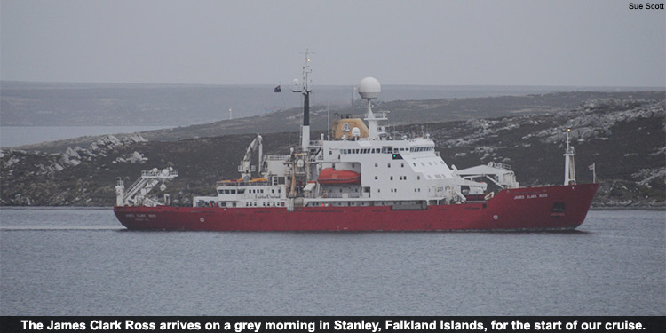 The James Clark Ross arrives on a grey morning in Stanley, Falkland Islands, for the start of our cruise.