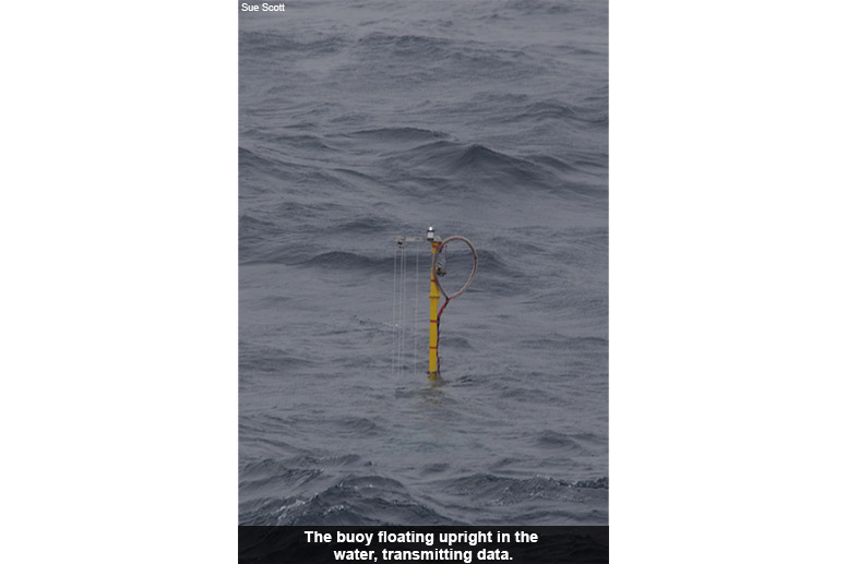 The buoy floating upright in the water, transmitting data.
