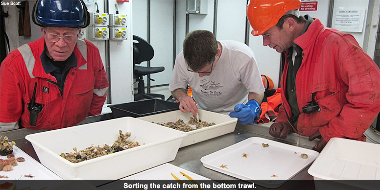 Sorting the catch from the bottom trawl.