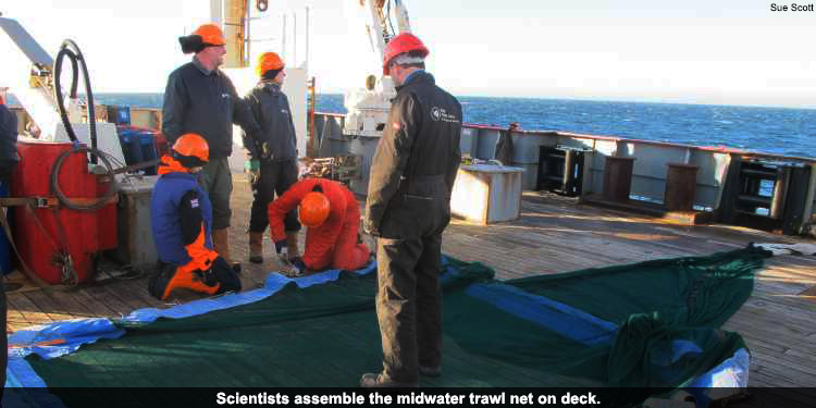 Scientists assemble the midwater trawl net on deck.