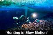 Hunting in Slow Motion