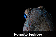 Remote Fishery