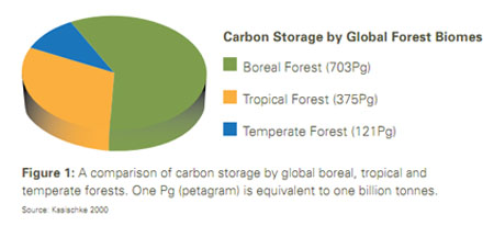 bor-carbon-storage-chart
