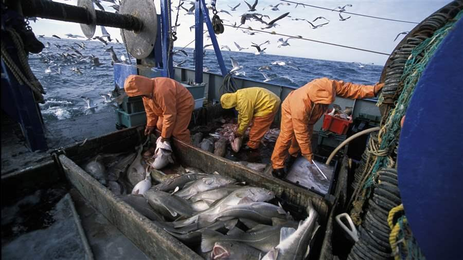commercial fishing and our oceans Overfishing occurs when more fish are caught than the population can our seas and oceans have been considered a limitless target fishing of top.